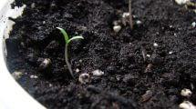 גינון אורגני ואקולוגי - להתחבר לאדמה ולגדל באופן טבעי
