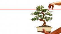 איך לגדל את עץ בונסאי בביתך בגינה או במשרדך | טיפים ועצות | צילום: Depositphotos |עיבוד צילום: שולי סונגו ©