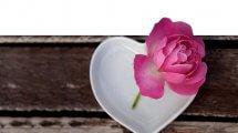 ורד על צלוחית בצורת לב | עיבוד צילום: שולי סונגו