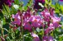 פרחים - מן הגינה לאגרטל, צמחי סתיו-חורף שמתאימים לקטיף | צילום: ארכיונעים | עיבוד צילום: שולי סונגו ©