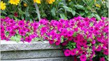 המלצות להכנת הגינה לאביב