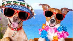טיפים לשמירת הכלב שלך בטוח מחום הקיץ | צילום: Dreamstime | עיבוד צילום: שולי סונגו©