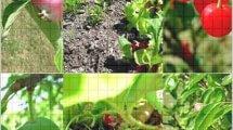 גידולים חקלאיים באיראן מעצמה של פירות, ירקות ועשבי תיבול אורגניים | עיבוד צילום ממחושב: שולי סונגו©
