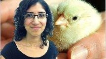 עדי אלייב, ממובילות המאבק בתעשיית מזון מן החי בארגון מגמה ירוקה