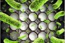 חיידק סלמונלה בביצים משרד הבריאות ו-משרד החקלאות, מזהירים הצרכנים מהחיידק