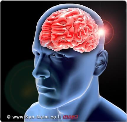 מוח וכלי דם | צילום: Depositphotos | עיבוד צילום: שולי סונגו ©