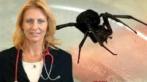 הלל יפה: פעוטה כבת שנה נעקצה על ידי עכביש האלמנה השחורה