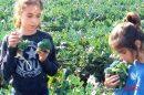ברוקומיני, ירק שהכנתו מהירה מאוד ומתאימה לשלל מאכלים, הילדים אוהבים אותו מאד
