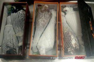 משרד החקלאות לכד ב'תיק נכה' הברחת יונים נדירות ב-600 יורו