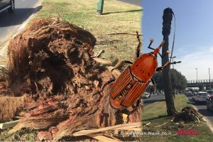משרד החקלאות מתריע מפני נפילת עצים עם בוא החורף | חדקונית הדקל