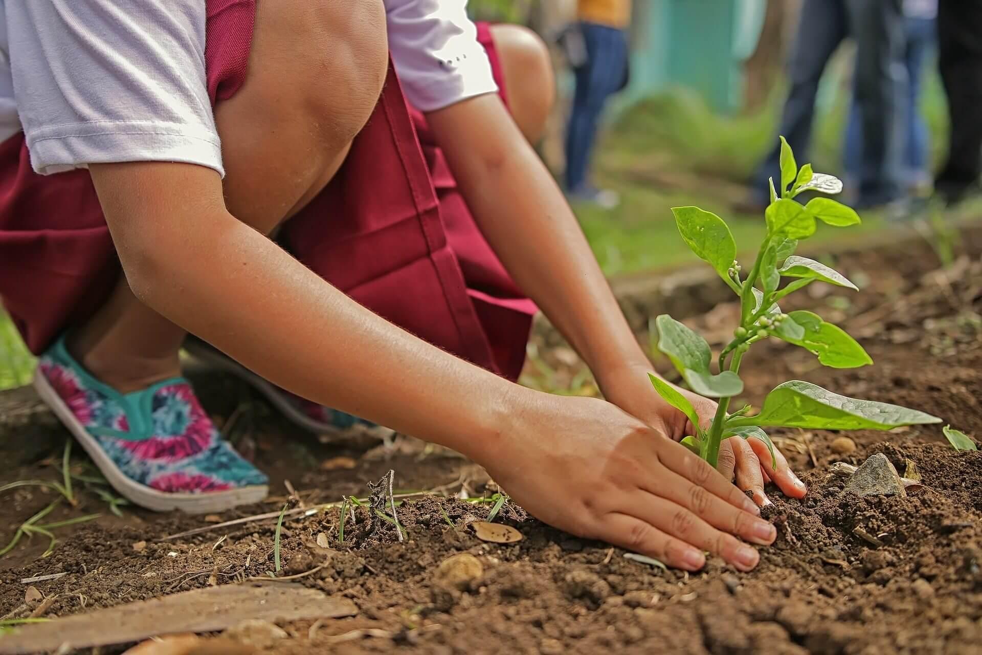 planting-1898946_1920.jpg