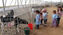 ילדי קיבוץ מבוא-חמה ברפת החדשה שנחנכה עם שירותי חליבה עם רפת קיבוץ גשור | צילום: ינון ברגיל