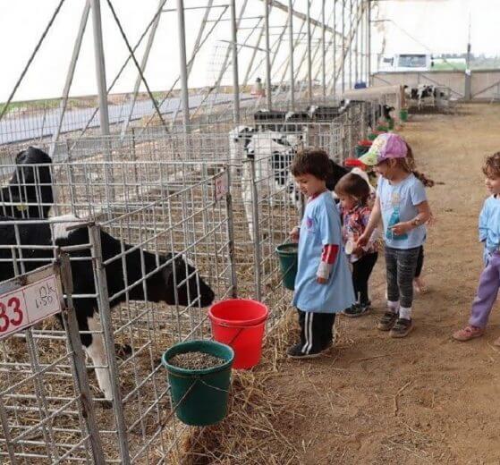 ילדי קיבוץ מבוא-חמה ברפת החדשה שנחנכה עם שירותי חליבה עם רפת קיבוץ גשור   צילום: ינון ברגיל