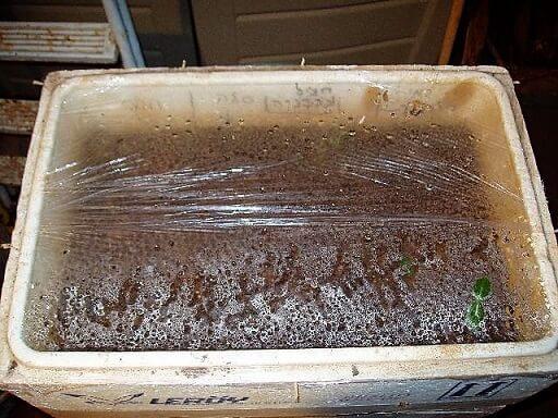 מנבטה ביתית לגידול זרעים | צילום: ראובן אורן