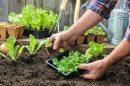 איך להכין את הגינה לירקות קיץ, המומחה ראובן אורן משיב לקושיה