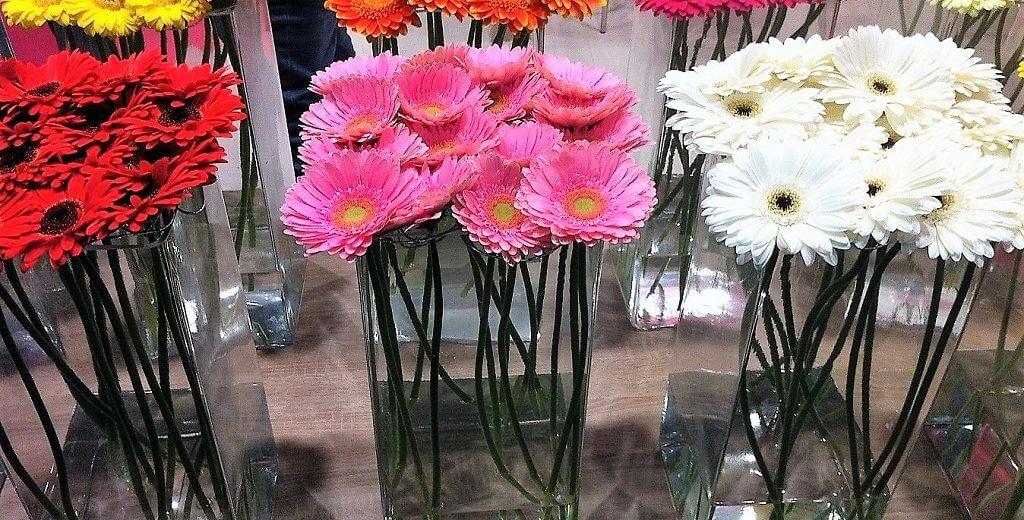 שוק הפרחים הגדול Outlet במתחם חוצות המפרץ: 9-10 באפריל   צילום: יובל בן שלום.