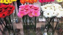 שוק הפרחים הגדול Outlet במתחם חוצות המפרץ: 9-10 באפריל | צילום: יובל בן שלום.