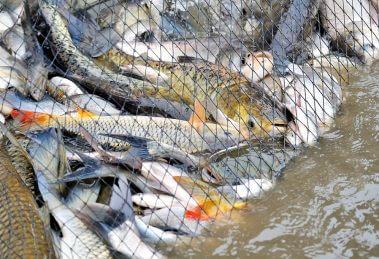 היום הבינלאומי נגד דיג: פעילי אנונימוס, ימחו לכודים ברשתות | עיבוד צילום: שולי סונגו ©