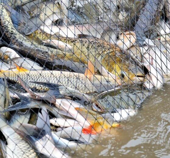 היום הבינלאומי נגד דיג: פעילי אנונימוס, ימחו לכודים ברשתות   עיבוד צילום: שולי סונגו ©