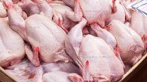 משרד החקלאות: עלול להיווצר מחסור בעופות טריים ברשתות השיווק | עיבוד צילום: שולי סונגו ©