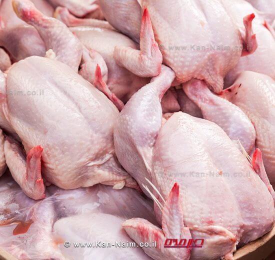 משרד החקלאות: עלול להיווצר מחסור בעופות טריים ברשתות השיווק   עיבוד צילום: שולי סונגו ©