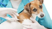 משרד החקלאות החליט כלב או חתול יימסר לאימוץ רק מסורס ועם שבב | עיבוד צילום: שולי סונגו