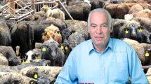 שר החקלאות אורי אריאל נענה לקריאת ארגון ישראל נגד משלוחים חיים והורה על מניעת את פריקת עגלים בישראל