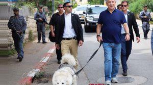 ראש הממשלה בנימין נתניהו בטיול עם קאיה, הכלבה המלכותית   העולם הזה על פי אורי אבנרי   עיבוד צילום: שולי סונגו ©