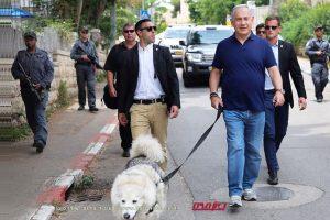 ראש הממשלה בנימין נתניהו בטיול עם קאיה, הכלבה המלכותית | העולם הזה על פי אורי אבנרי | עיבוד צילום: שולי סונגו ©