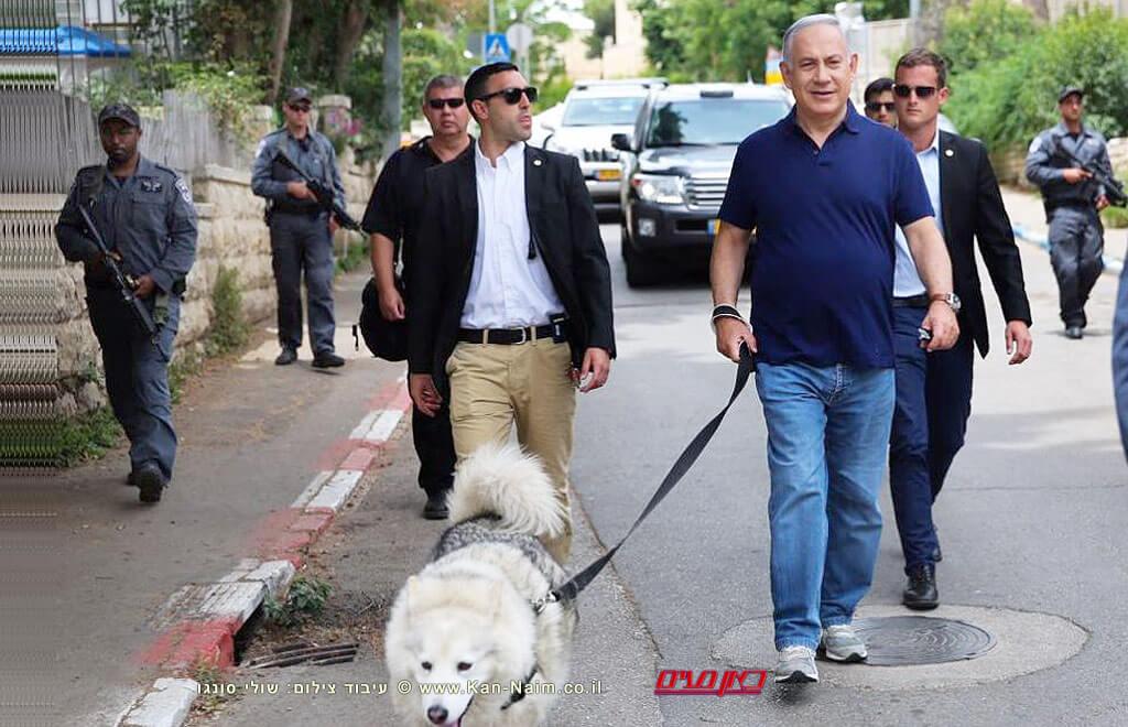 ראש הממשלה מר בנימין נתניהו בטיול עם קאיה, הכלבה המלכותית   העולם הזה על פי אורי אבנרי   עיבוד צילום: שולי סונגו ©