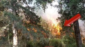 השריפה ביום ראשון בערב ביערות מנשה | צילום: יונתן פינקס | עיבוד צילום: שולי סונגו ©