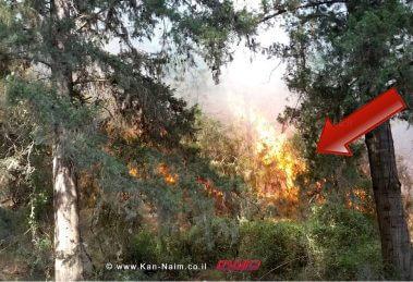 השריפה ביום ראשון בערב ביערות מנשה   צילום: יונתן פינקס   עיבוד צילום: שולי סונגו ©