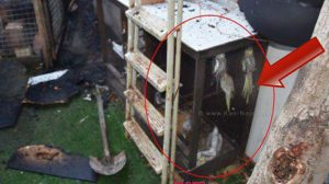 התוכים ששרדו והתוכים שנשרפו על ידי יהודה ואנונו מראשון לציון, בגלל שהיוו מטרד לגביו | צילום: משטרת ישראל
