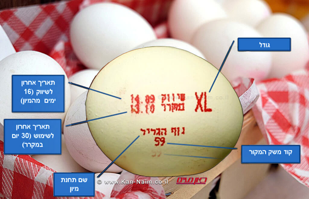 על מה עלינו לשים דגש בעת רכישת הביצים | באדיבות דוברות משרד החקלאות | עיבוד צילום: שולי סונגו ©