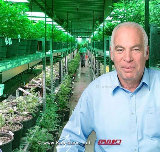 שר החקלאות, אורי אריאל גידול קנביס בישראל יוכר כ'ענף חקלאי'   עיבוד צילום: שולי סונגו ©