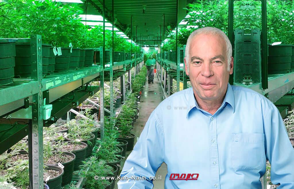 שר החקלאות, אורי אריאל גידול קנביס בישראל יוכר כ'ענף חקלאי' | עיבוד צילום: שולי סונגו ©