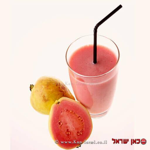 'גויאבה האדומה' בריאה יותר   עיבוד צילום: שולי סונגו ©