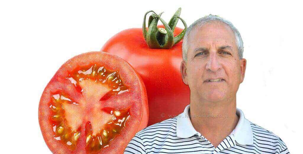 רמי דר, מנכל חברת הזרע | רקע: עגבניית מגי| צילום נילי שניר| עיבוד צילום: שולי סונגו ©