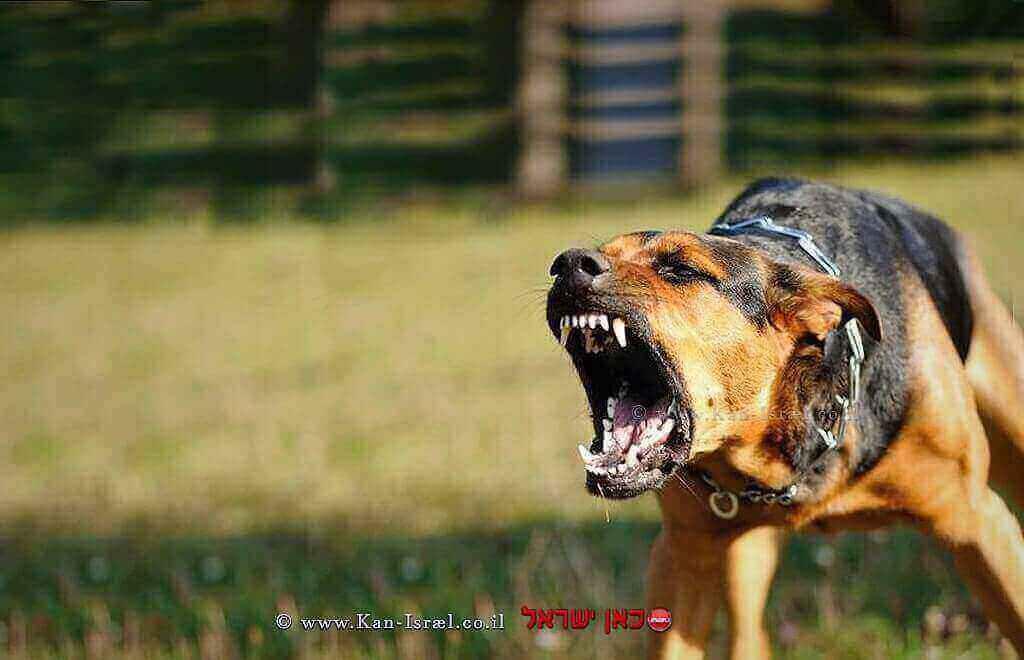 כלב חשוד שלקה במחלת הכלבת
