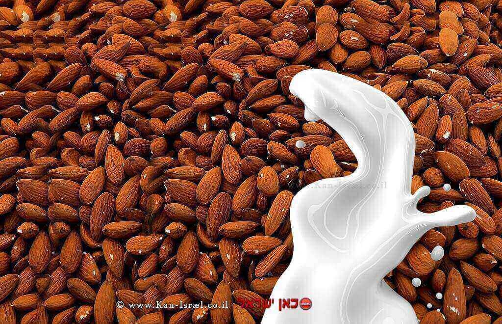 שקדים עם חלב | עיבוד: שולי סונגו ©