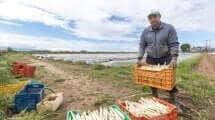 עובד זר בחקלאות| עיבוד: שולי סונגו ©