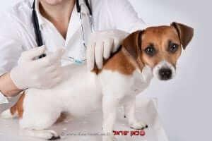ודא חיסון כלבך ממחלת הכלבת | עיבוד צילום: שולי סונגו ©