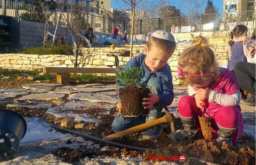 נטיעות בגינה הקהילתית בשכונת עיר גנים בירושלים, טו בשבט