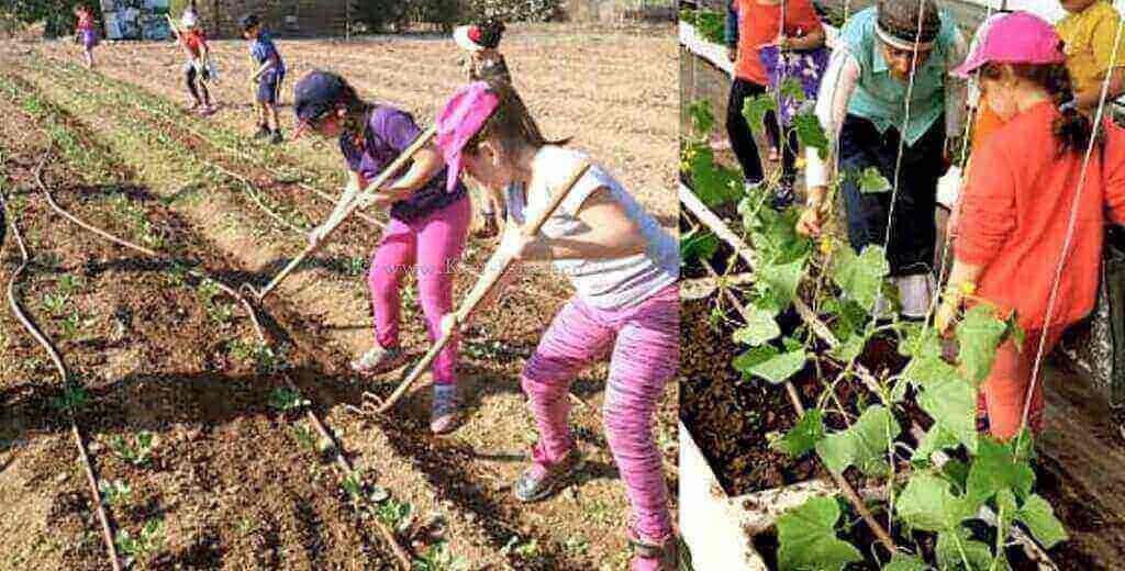 תלמידים בחווה חקלאית-קיימות | צילום: דוברות משרד החינוך