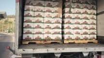 המשאית עם 13 טון ירקות מהשטחים בניסיון הברחה
