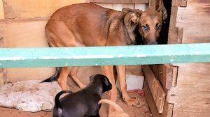 חילוץ של גורי כלבים ביישוב קדימה-צורן על ידי מפקחי משרד החקלאות