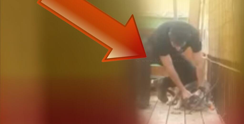 הצעיר שתועד בועט בכלבתו ומטיח ראשה ברצפה