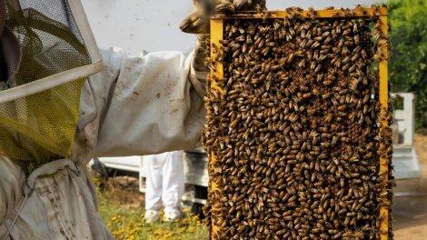 חלת דבש   צילום: צפריר ניר