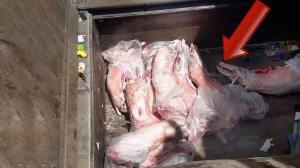 בשר כבש משחיטה שחורה בשפרעם