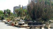 גן הקקטוסים בחולון | צילום: מוטי ישר